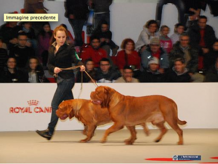 23-24 gennaio 2010 - Milano - International Dog Show - IRONMASTIFF-KENNEL