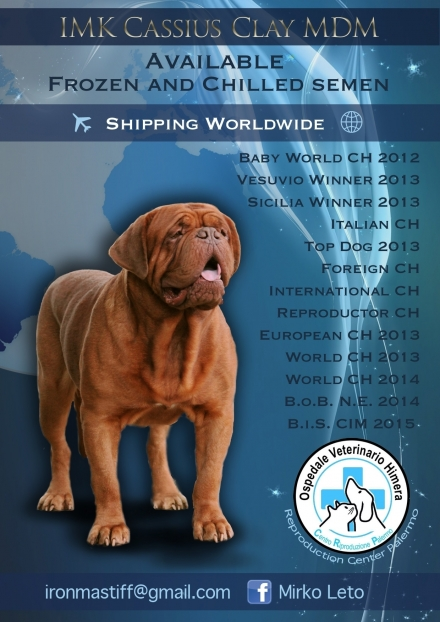 AVAILABLE FROZEN AND CHILLED SEMALE !! - IRONMASTIFF-KENNEL