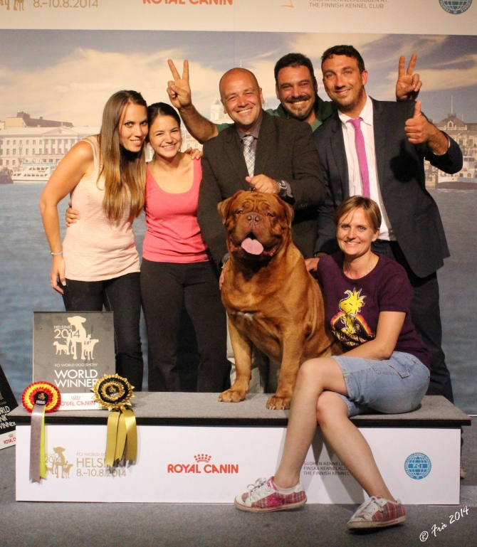 IMK CASSIUS CLAY MDM AGAIN…. WORLD WINNER 2014 !!!!!!!!! - IRONMASTIFF-KENNEL