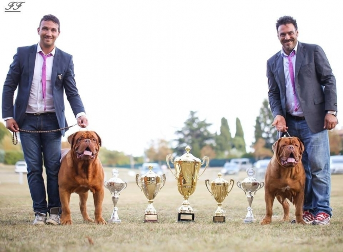 NATIONALE' D'ELEVAGE' - CABRIS 2014 !!!! - IRONMASTIFF-KENNEL