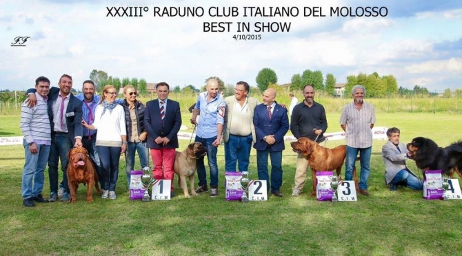 .: RADUNO CLUB ITALIANO DEL MOLOSSO 2015 !!!:. - IRONMASTIFF-KENNEL
