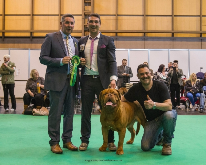 .: IMKCASSIUS CLAYMDM BOB AL CRUFTS 2016 :. - IRONMASTIFF-KENNEL