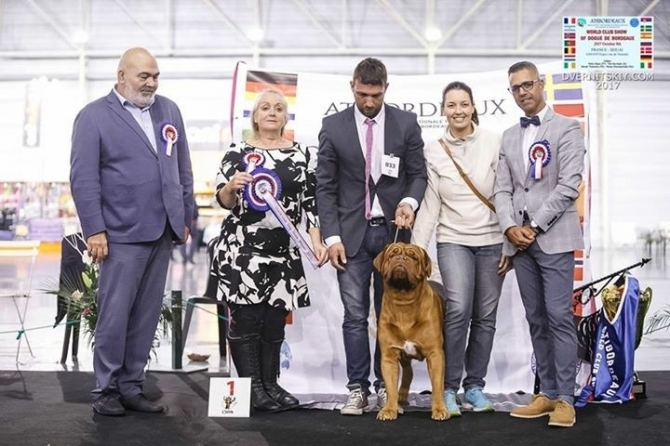 .: MDM PUSCAS IMK ATIBORDEAUX WORLD WINNER 2017 :. - IRONMASTIFF-KENNEL