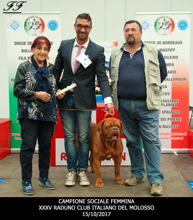 .: IMK HULA MDM : NEW ITALIAN'S SOCIAL CHAMPION WINNER  2017 :. - IRONMASTIFF-KENNEL